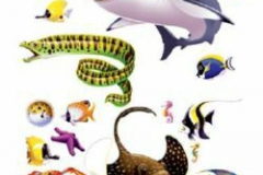 Cutout Props Marine Life (15cm - 127cm) INSTA-THEME - Pack of 16